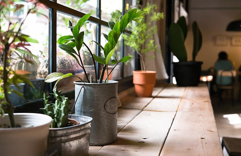 Mayra's botanische hotspot: indoor garden