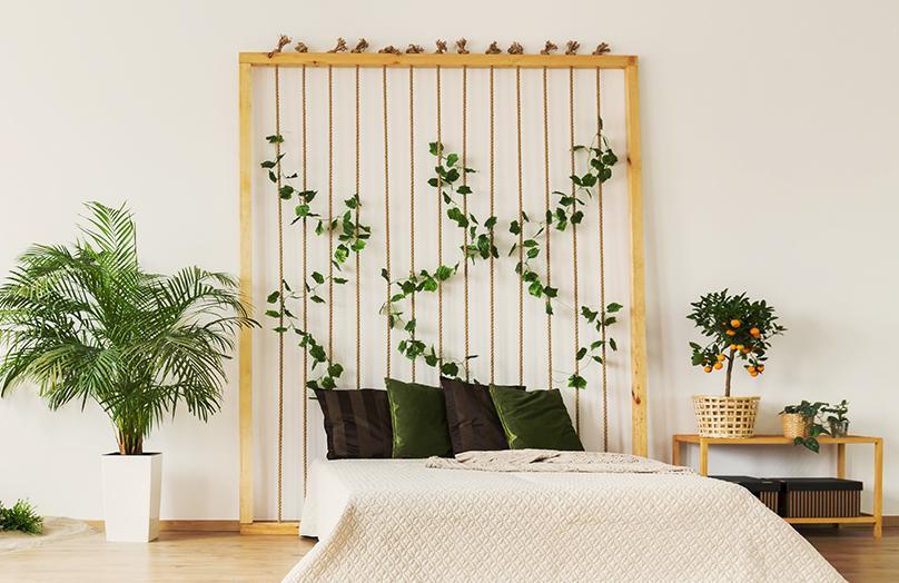 5 x planten voor een betere nachtrust
