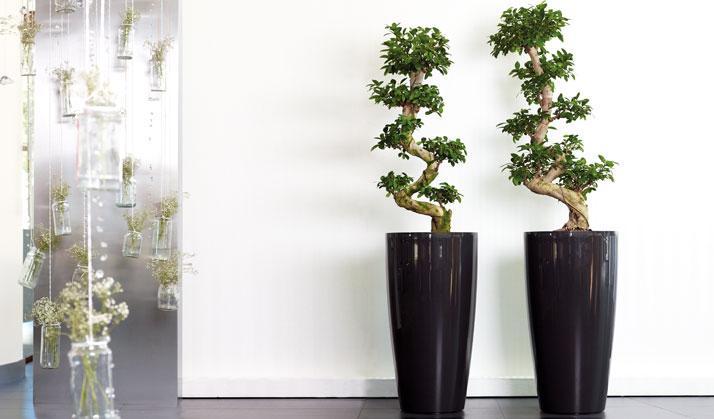 Artevasi zwei Vasen mit Pflanzen