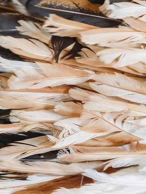 Decorative feathers in brown