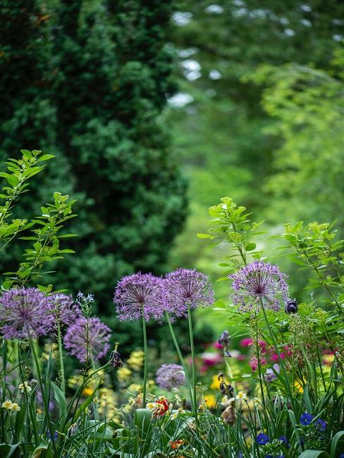 Pflegeleichter Garten mit Pflanzen