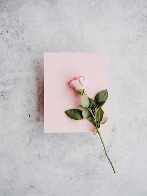 Sobre rosa con rosa encima