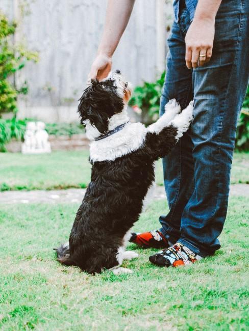 perro en la calle con amigo