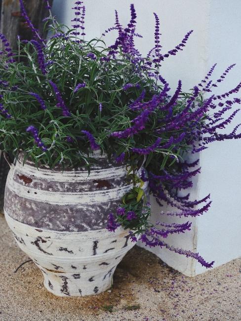 Grand pot en céramique avec plante de lavande