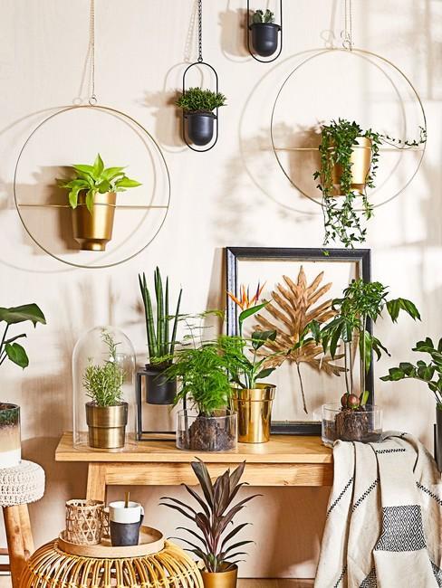 potplanten Jungle behang hangplanten tegen witte muur