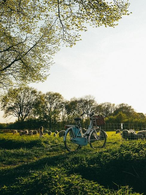 Fiets in grasveld met schapen op de achtergrond