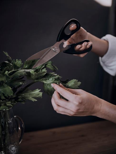Zbliżenie na dłoń trzymającą nożyczki i przycianjącą roślinę