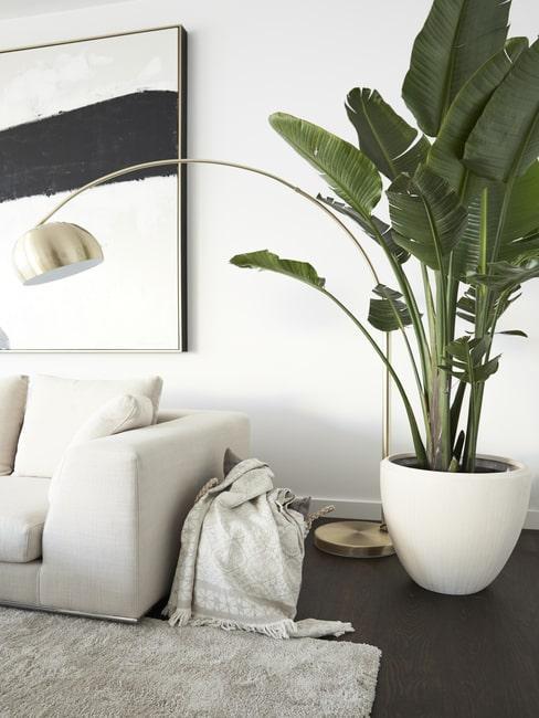 Roślina w jasnej donicy ustawiona przy sofie w salonie