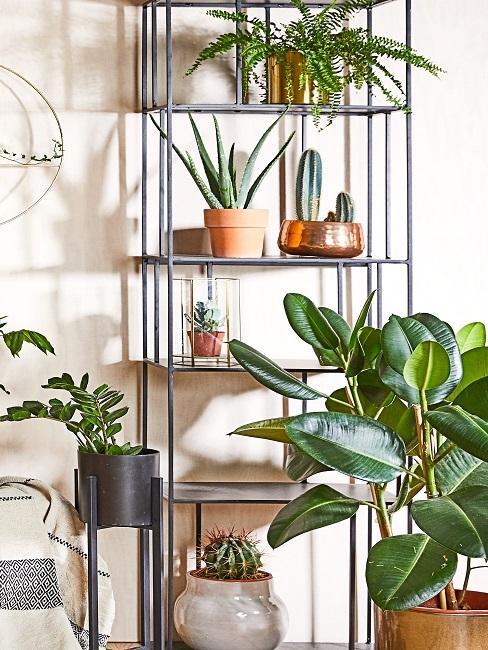 Metallregal mit vielen Pflanzen und auch Kaktussen in verschiedenen dekorativen Übertöpfen