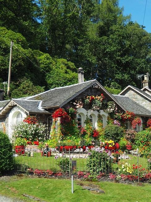 She Shed mit roten Blumen und zahlreichen Pflanzen
