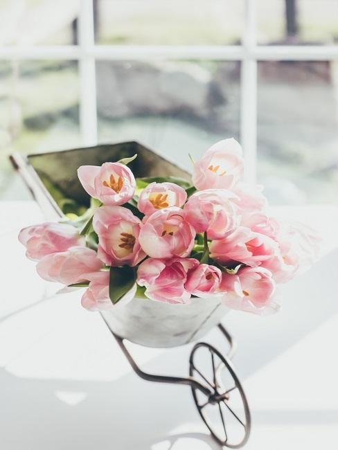 Rosa Tulpenbund in kleinem Rollwagen