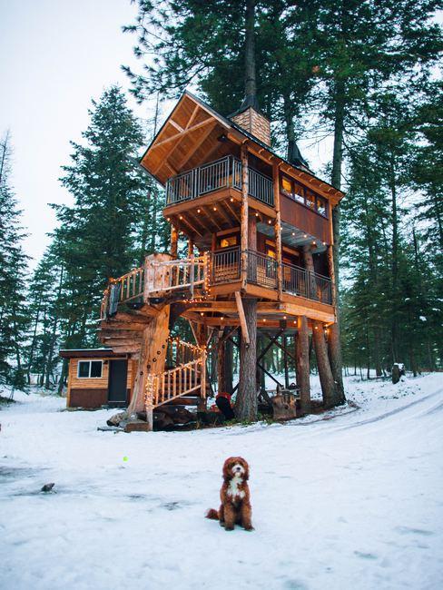 Casa en un árbol en campo nevado y perro