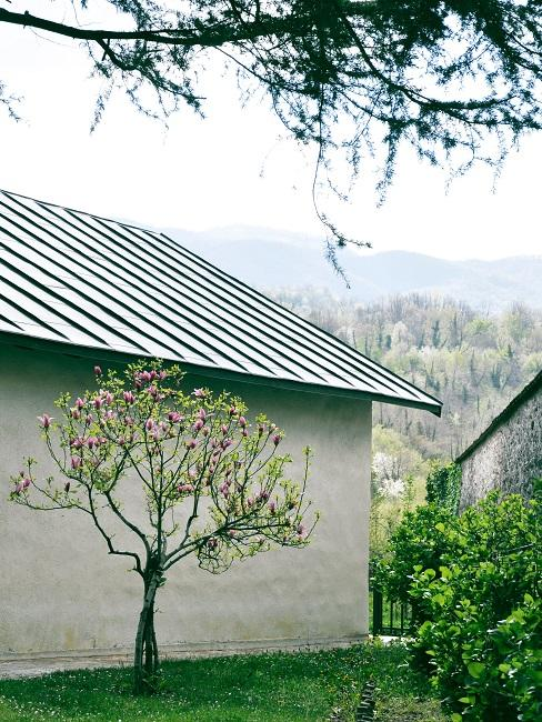 Witte schuur met boom