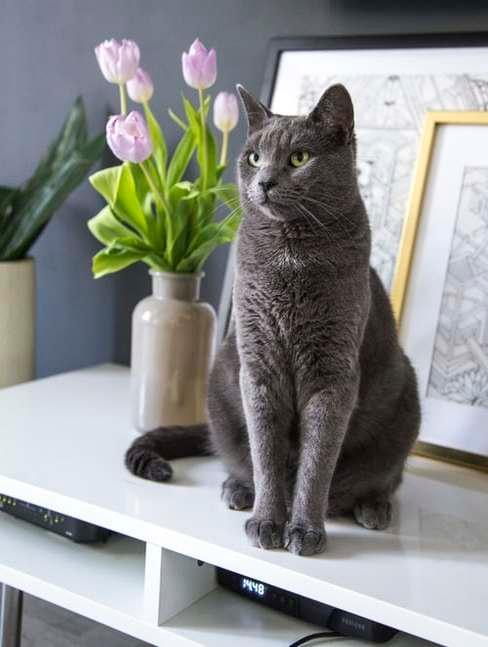 Kot siedzący obok wazonu z kwiatami