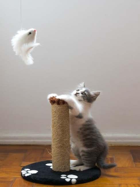 Kot bawiący się na drapaku