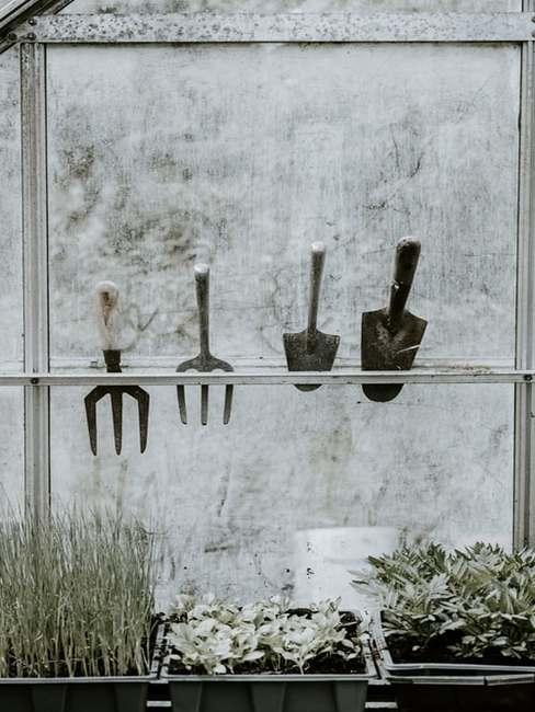 Narządzia ogrodowe umieszczone na specjalnej półce nad grządką warzywną