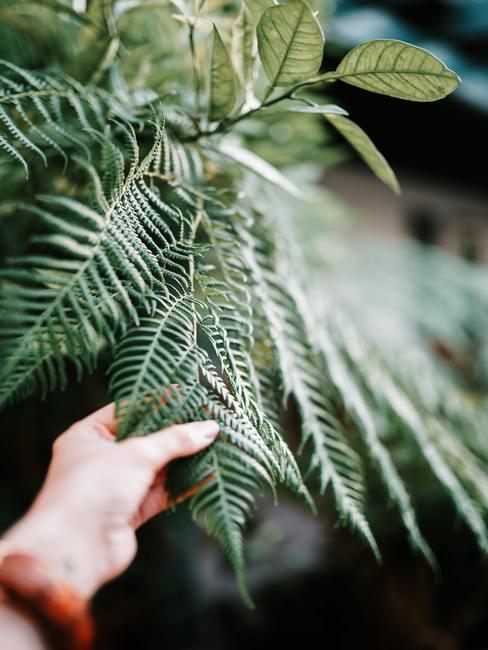 Dłoń trzymająca liść paproci