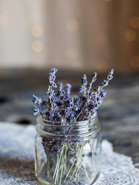Łodygi lawendy w szklanym słoiku