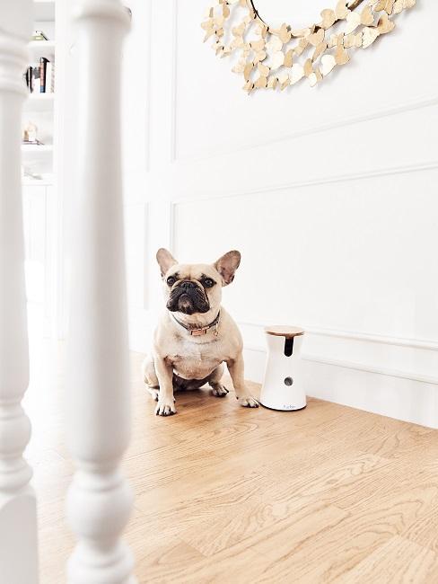 Pies siedzący na podłodze
