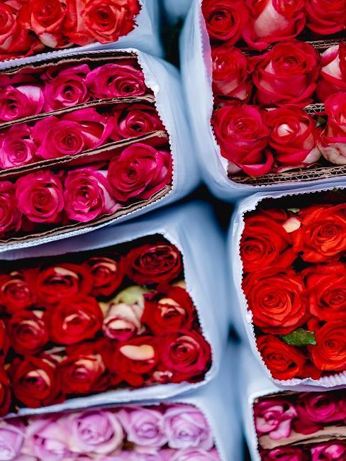 Rote Rosen in Verpackungen