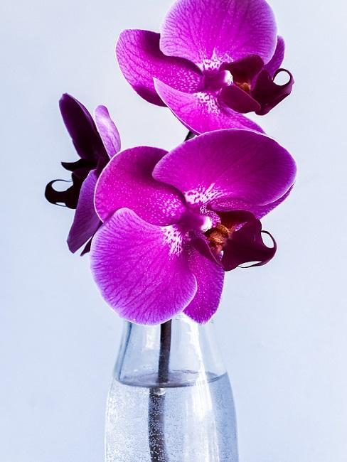 Purple orchids in glass bottle