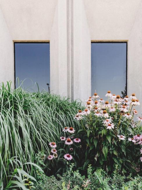 Jardin avant avec fleurs et deux fenêtres