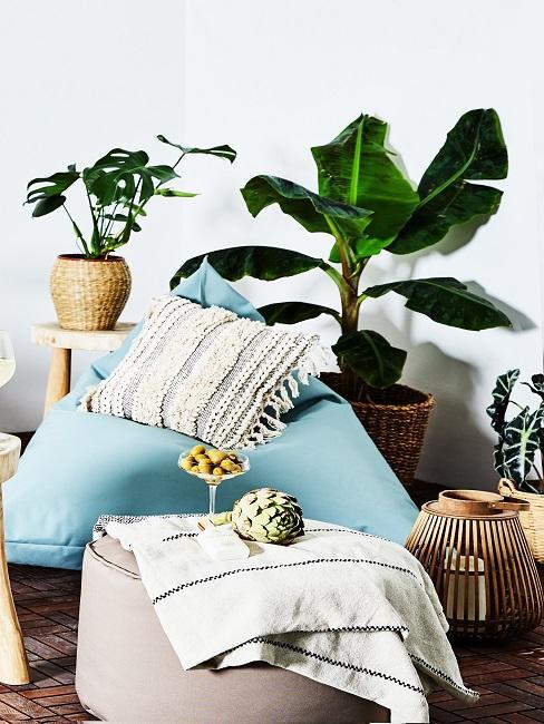 Wohnraum mit Zimmerpflanzen.