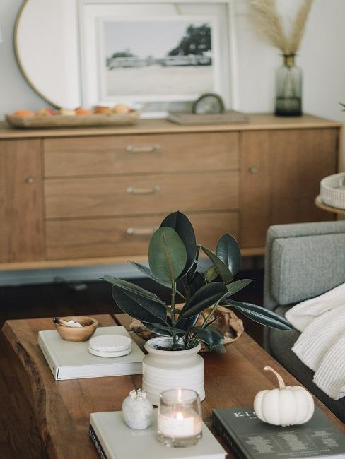 Wohnzimmer Pflanze Ficus auf Tisch mit Deko
