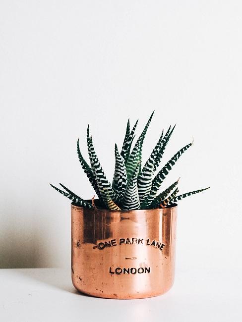 Tisch-Deko Roségold Kaktus