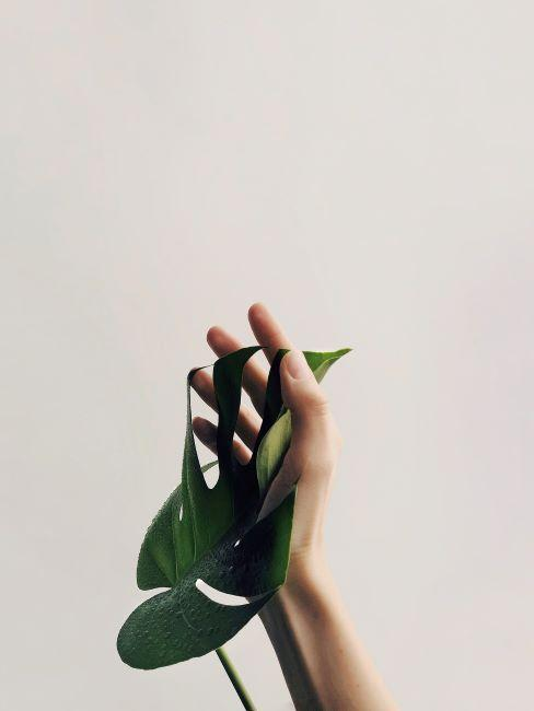 Mano acariciando hojas de una planta