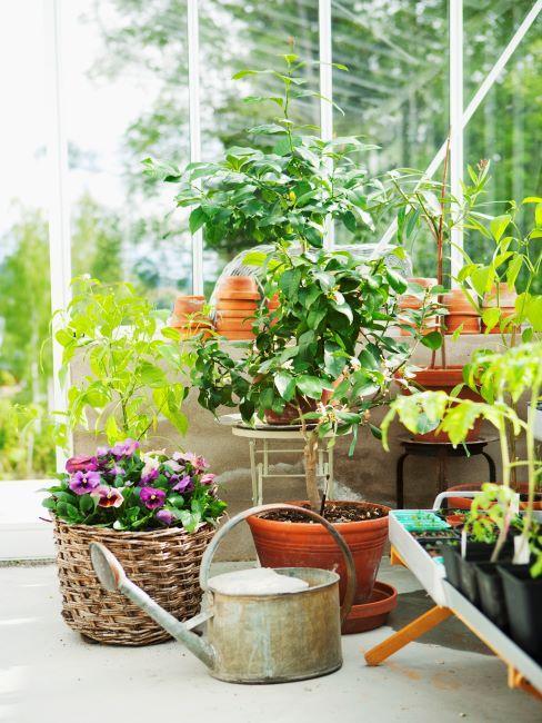 Plantes et arrosoir sur un balcon