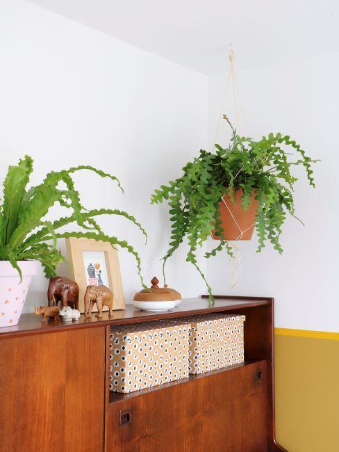 Enfilade en bois avec plantes vertes, cadre, accessoires de décoration et boîtes de rangement