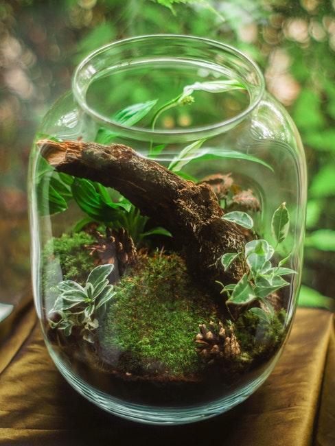 terrarium en pot