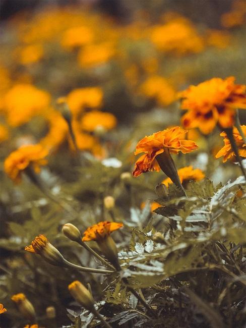 Bloembed gele bloemen