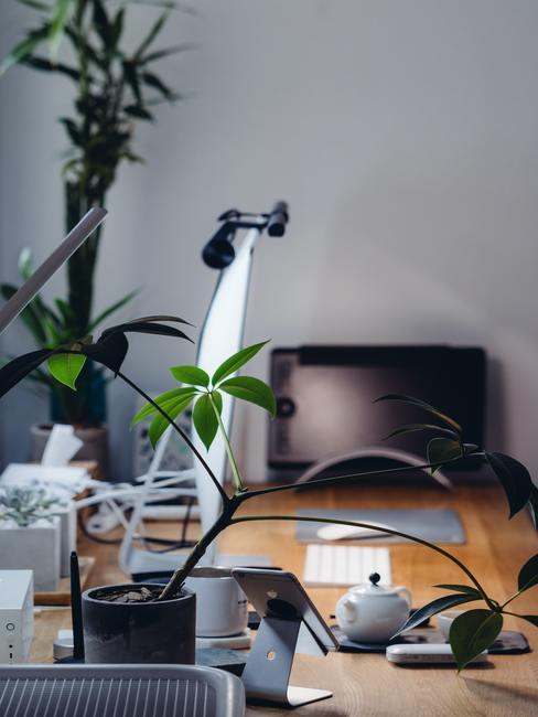 Een bureau bij het raam met veel planten