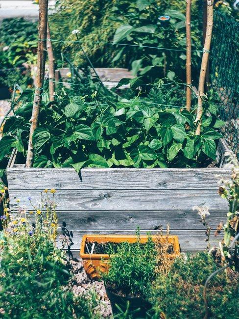 Kruiden in een tuin
