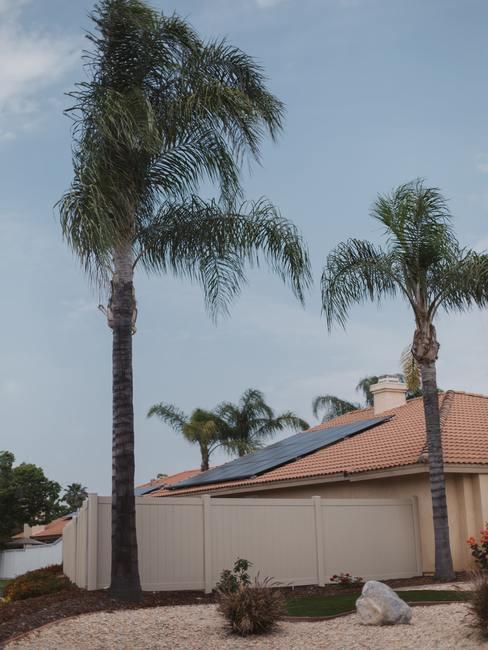 Zonnepanelen op dakpannen met palmbomen