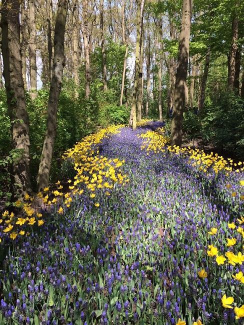 Bospad met gele en paarse bloemen