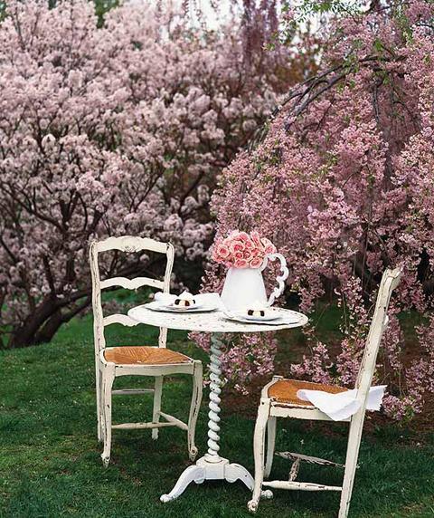 Kirschblütenzauber