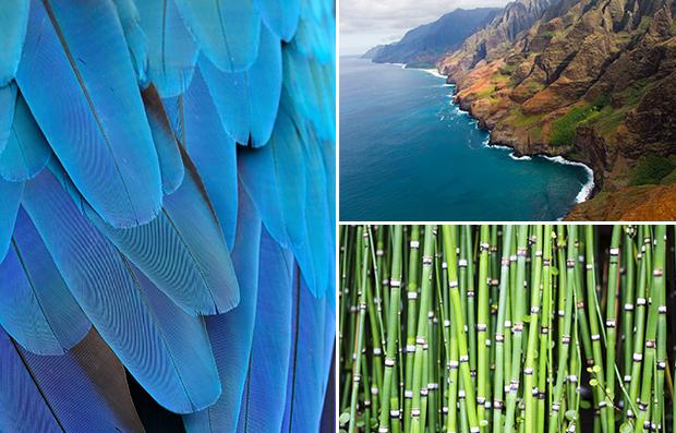 Inspirations Hawaii
