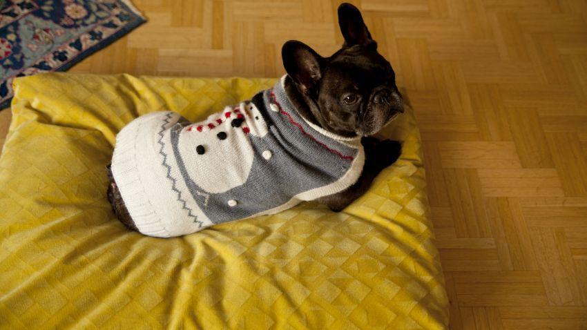 Coussin pour chien