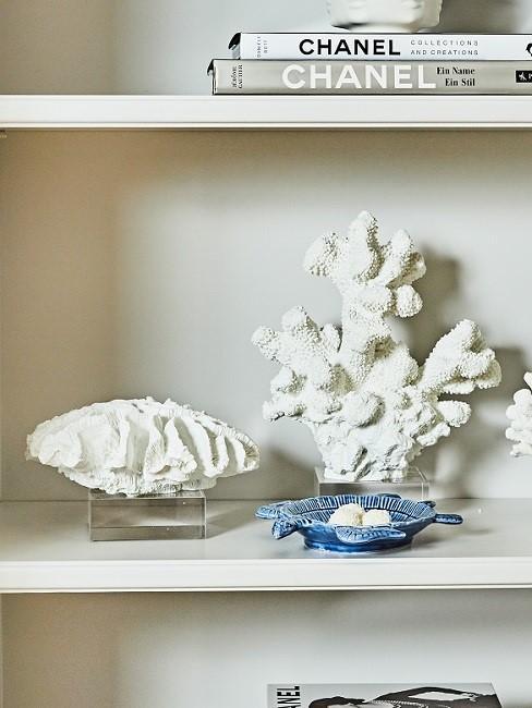 Seashells decoration shelf
