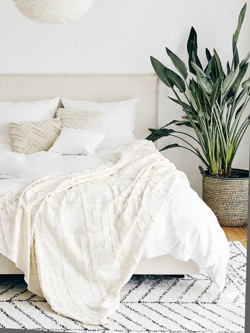 Pflegeleichte Zimmerpflanzen neben Bett im Schlafzimmer