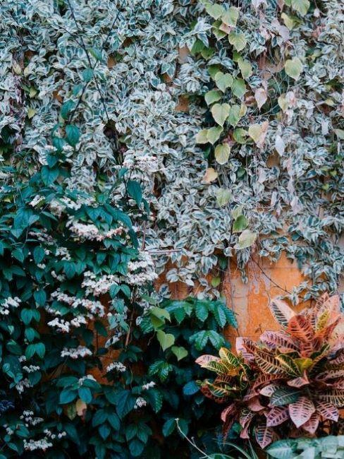 parete verde con piante