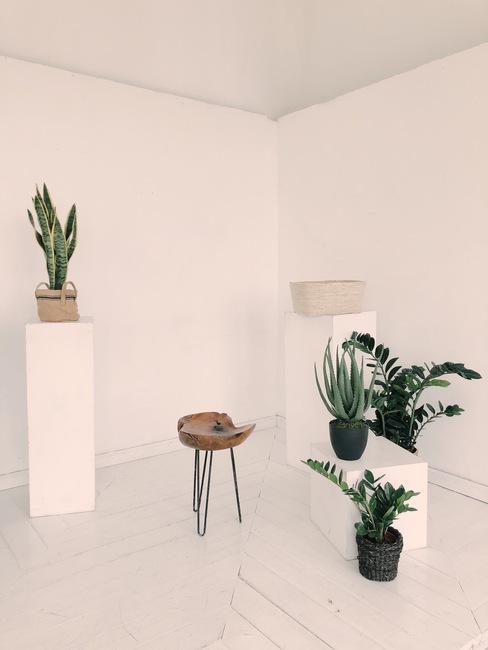 Decoratie van groene planten in witte en zwarte potten