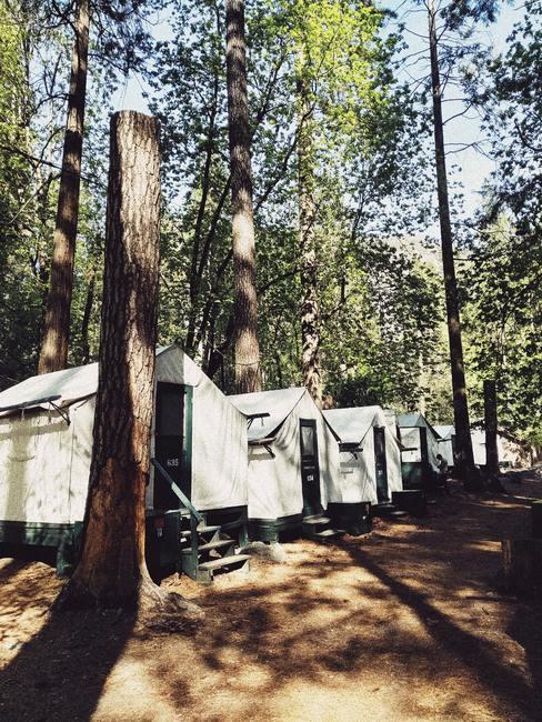 Tenten op een rij in het bos