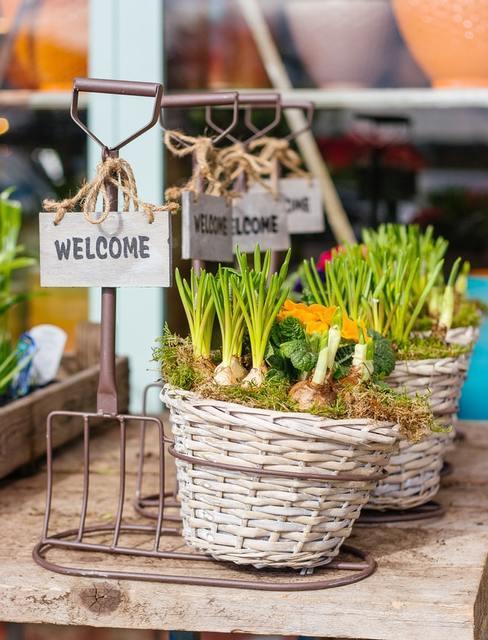 Wiklinowy koszyk z cebulkami kwiatów