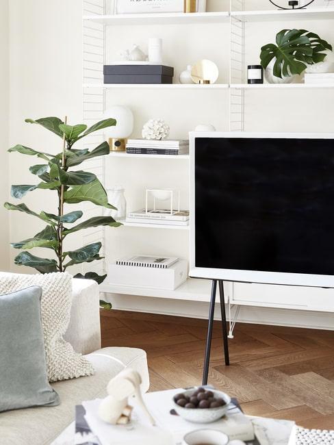 Fikus lirolistny w salonie przy telewizorze