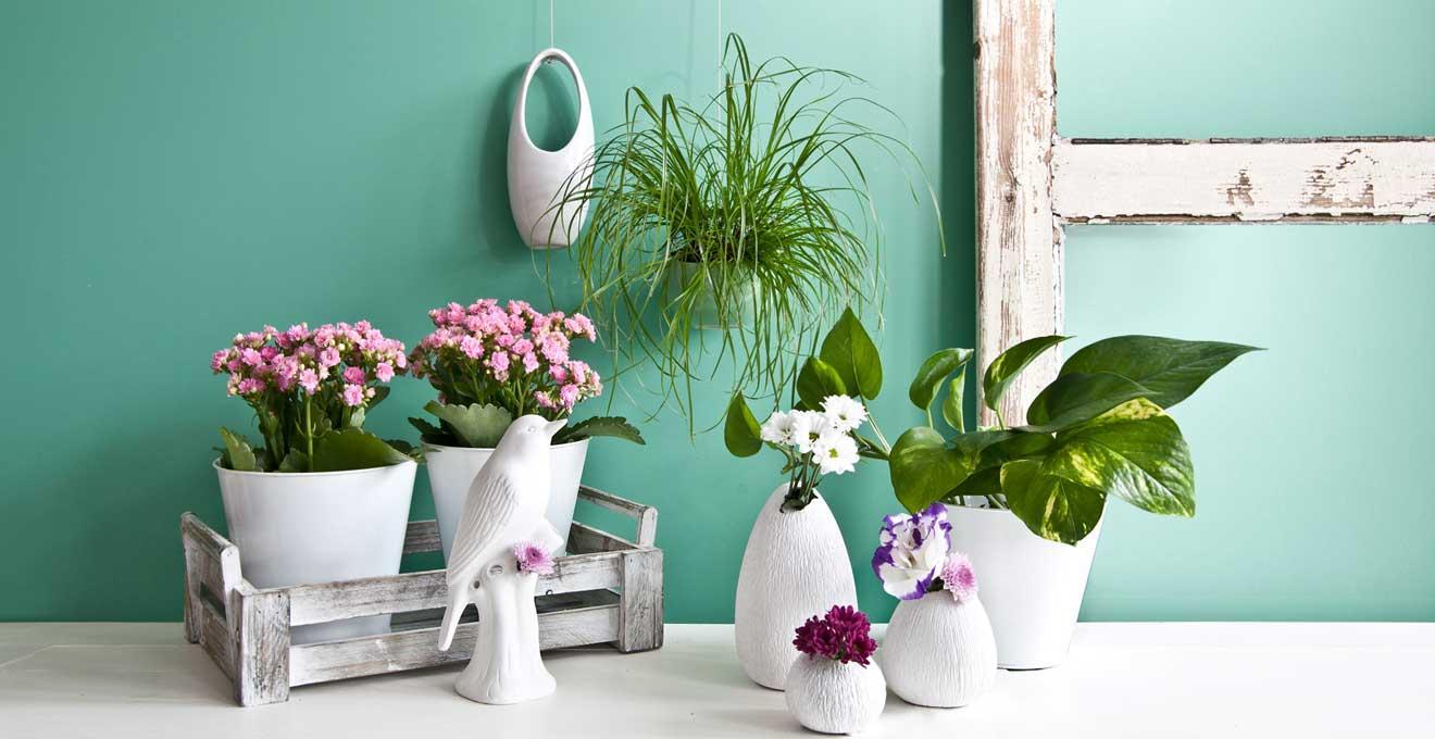 Große Zimmerpflanzen