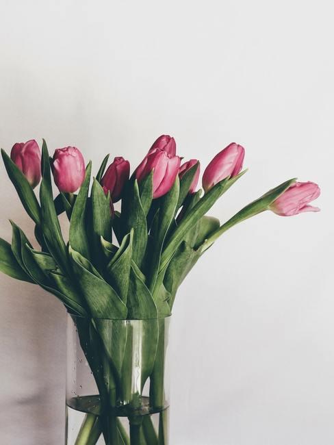 Wazon rożowych tulipanów w wazonie